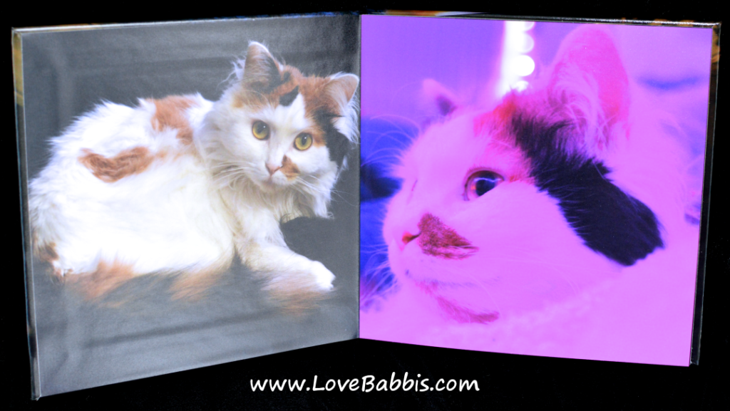 "LoveBabbis 8"" by 8"" Hardcover Pages 1-2"