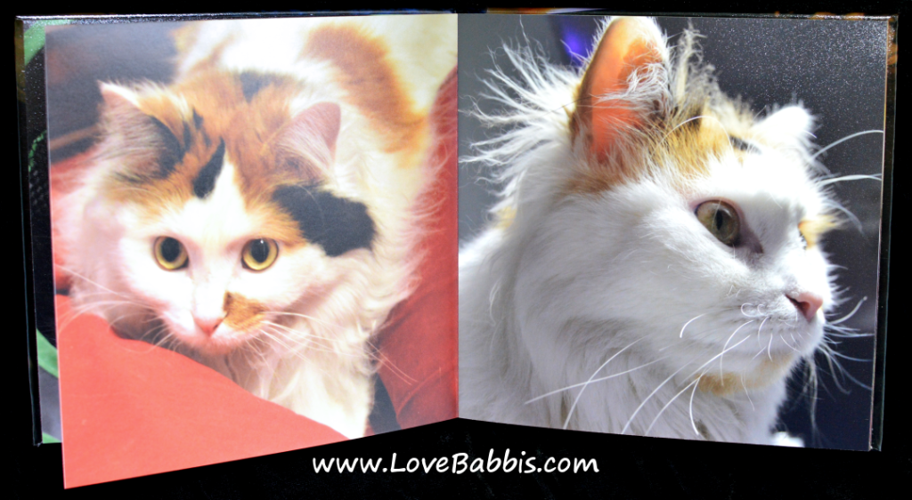 "LoveBabbis 8"" by 8"" Hardcover Pages 5-6"