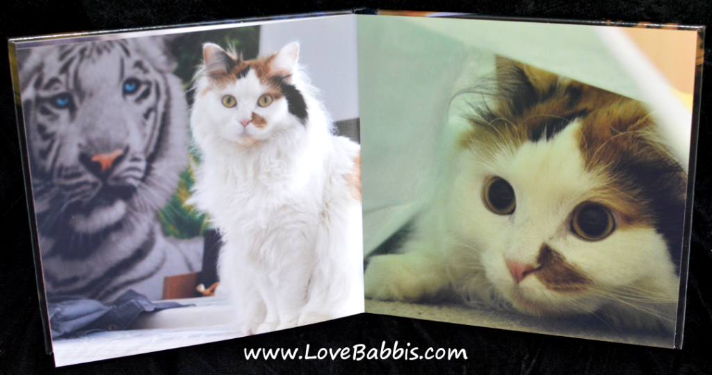 "LoveBabbis 8"" by 8"" Hardcover Pages 9-10"