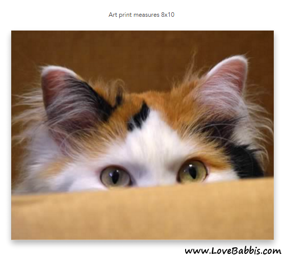 Babbis Peering Out of a Cardboard Box