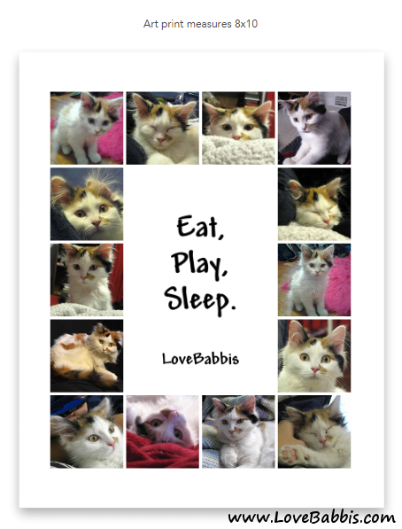Babbis as a Kitten Collage