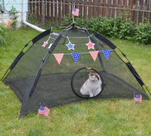 Babbis in Her Pawtriotic Tent